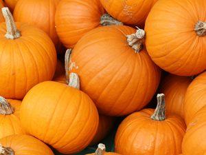 Follow the Pumpkin Code