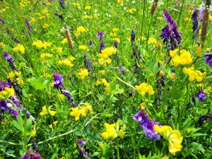 Meadow planting