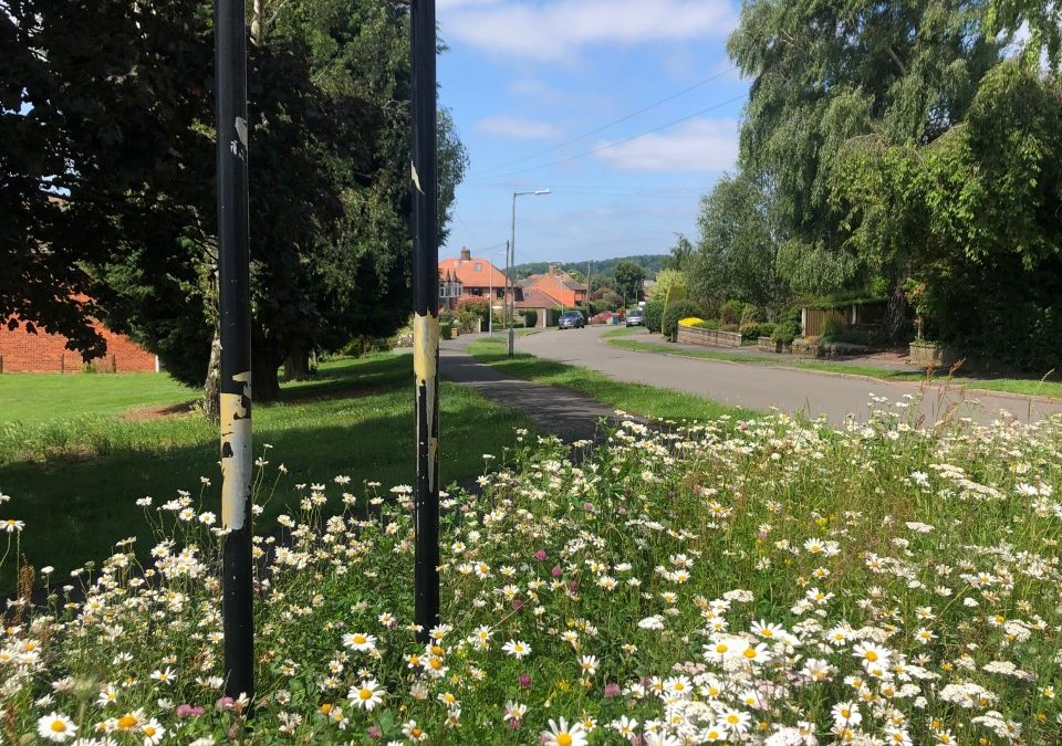 Summer blooms in Tollerton